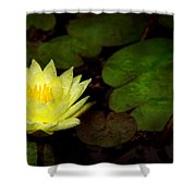 Flower - Lily - Morning Showers Shower Curtain