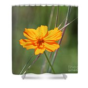 Flower Lit By The Sun's Rays Shower Curtain