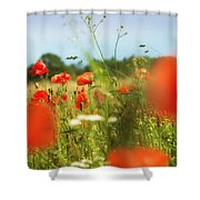 Flower Meadow In Summer With Red Poppy Shower Curtain
