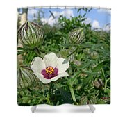 Flower Of An Hour Shower Curtain
