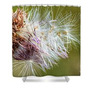 Flower Of The Canada Thistle Shower Curtain
