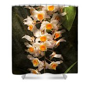 Flower - Orchid - Dendrobium Orchid Shower Curtain