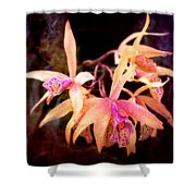 Flower - Orchid - Laelia - Midnight Passion Shower Curtain