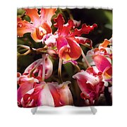 Flower - Orchid - Oncidium Orchid - Eye Candy Shower Curtain