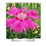 Flower Pink Shower Curtain