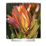 Flower-protea-bloom Shower Curtain