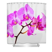 Flower Purple Orchid  Shower Curtain