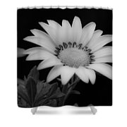 Flower  Shower Curtain by Ron White