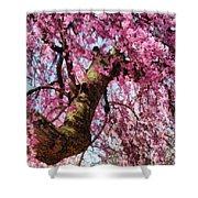 Flower - Sakura - Finally It's Spring Shower Curtain by Mike Savad