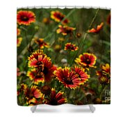 Texas Indian Blanket -  Luther Fine Art Shower Curtain