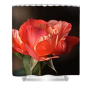 Flower-tri Toned-rose Shower Curtain