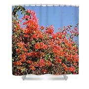 flower wall in Madagascar Shower Curtain