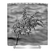 Flower Weed Shower Curtain