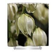Flower-yacca-bloom Shower Curtain