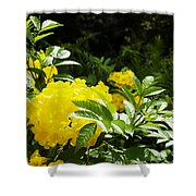 Flower - Austin Botanical Gardens -  Luther Fine Art Shower Curtain