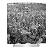 Flowered Field Shower Curtain
