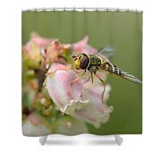 Flowerfly On Blueberry Blossom Shower Curtain