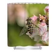 Flowerfly Pollinating Blueberry Buds Shower Curtain