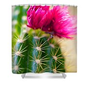 Flowering Cactus Shower Curtain