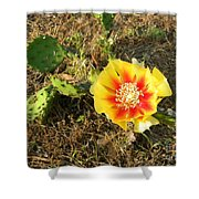 Flowering Cactus Shower Curtain