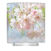 Flowering Cherry Tree Blossoms Shower Curtain