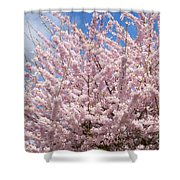 Flowering Cherry Tree Shower Curtain