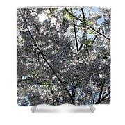 Flowering Cherry - White Shower Curtain