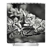 Flowering Crabapple 2 Bw Shower Curtain