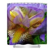 Flowering Iris Shower Curtain