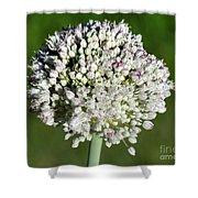 Flowering Leek - Topaz Clarity Demo Shower Curtain