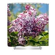 Flowering Lliac Bush Shower Curtain