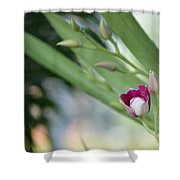 Flowering  Orchid Stem Shower Curtain