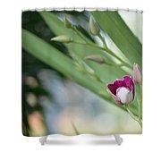 Flowering  Orchid Stem Shower Curtain