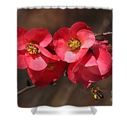Flowering Quince With Bee Shower Curtain