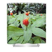 Flowering Red Ginger Plant Shower Curtain