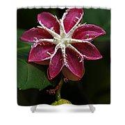 Flowers 12 Shower Curtain