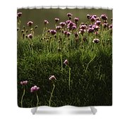 Flowers Above The Beach Shower Curtain