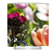 Flowers At Dallas Arboretum V13 Shower Curtain