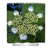 Flowers At Soos Creek Botanical Garden II Shower Curtain