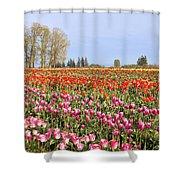Flowers Blooming In Tulip Field In Springtime Shower Curtain