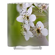 Flowers - Blossoms Shower Curtain