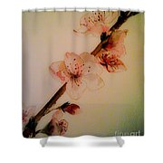 Flowers - Cherry Blossoms - Blooms Shower Curtain