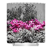 Flowers Dallas Arboretum V17 Shower Curtain
