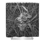 Flowers In Spring Black And White Shower Curtain