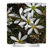Flowers In The Pot Shower Curtain