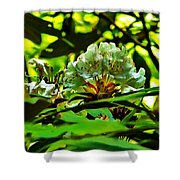 Flowers In The Woods Shower Curtain