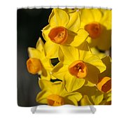 flowers-Jonquils-bright yellow Shower Curtain