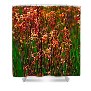 Flowers Of Fire Shower Curtain
