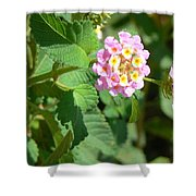 Flowers Of Pink And Orange Shower Curtain
