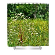 Flowers Of The Field Shower Curtain